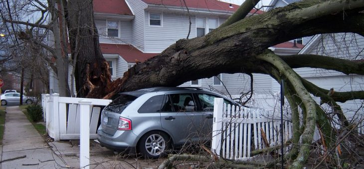 Verkehrssicherungspflicht für Baumeigentümer