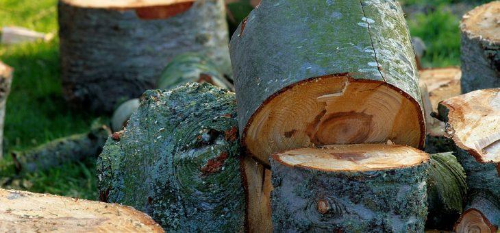 Baumfällungen noch bis 29.02.2020 möglich