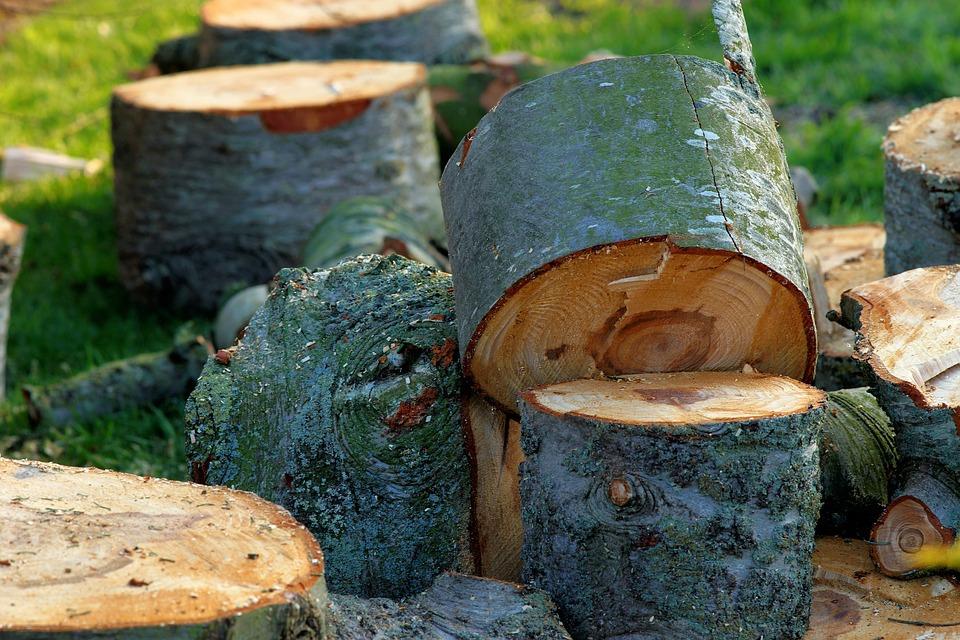 Baumpfleger Jobs für dich in Berlin und Brandenburg